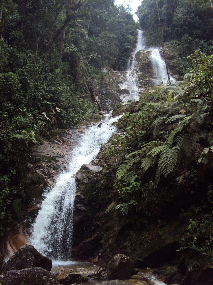 Caminata Limoncito a Cascada los Venados – Noviembre 21 de 2010
