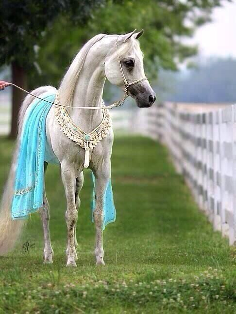 I want an Arabian just so I can dress him up like this ^_^