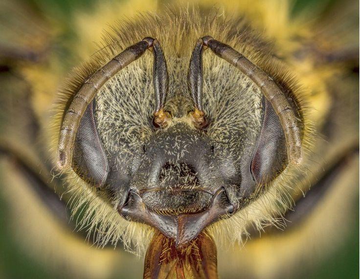 Insectos, de villanos a útiles protectores del ecosistema - SciDev.Net América Latina y el Caribe.  Y, sin embargo, la gran mayoría de insectos es, en realidad, prestadora de muchos servicios ecosistémicos, además de ser fundamentales para el equilibrio de la vida terrestre.   Con cerca de un millón de especies descritas y estimaciones de entre seis a 30 millones de especies existentes, los insectos contribuyen notablemente a la diversidad.