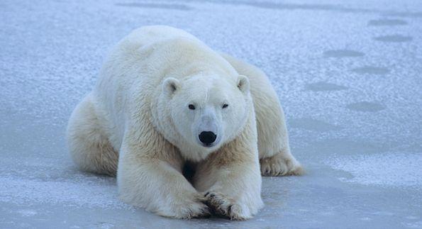 Database sprilib russian north polar 6.39