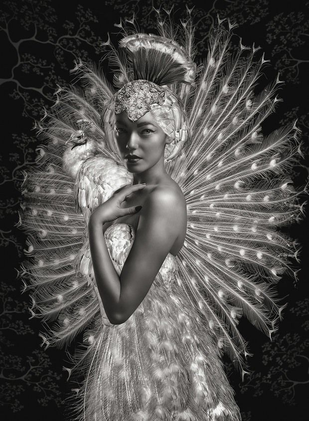 Beauté Aviaire by Lee Howell