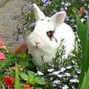 natural ways to keep rabbits out of flower beds