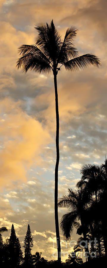 Palm Tree Sunset Hana Hawaii Photograph  - Palm Tree Sunset Hana Hawaii Fine Art Print