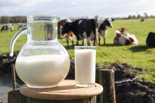 """¿Consumes leche """"baja en grasa? este artículo te dirá por qué la leche baja en grasa no es lo que parece."""
