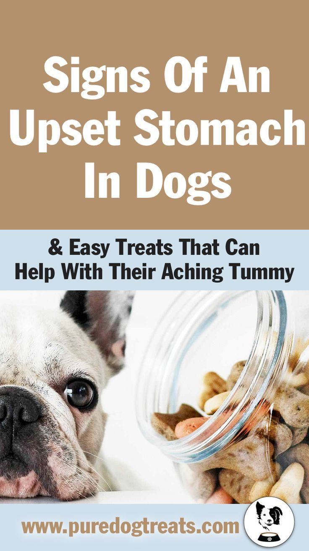 Easy Dog Treats To Help Your Pet S Aching Tummy Dog Upset