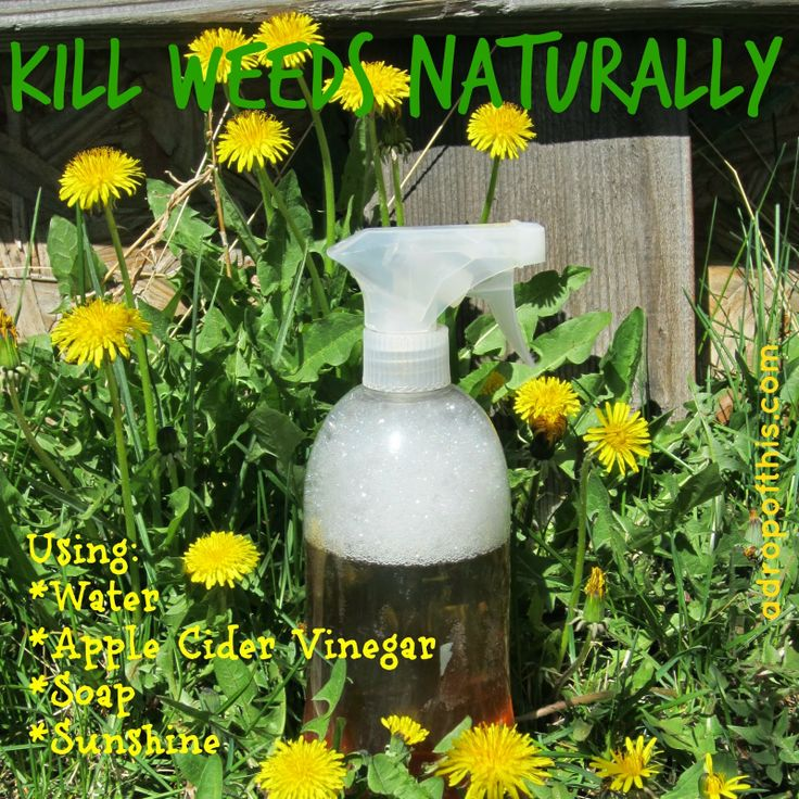how to kill weeds in garden. a drop of this: kill weeds *naturally* how to in garden e