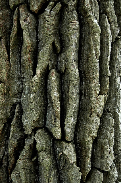 Texture-Rrific Tree Bark by Odalaigh, via Flickr