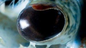 20 de imagini senzaționale cu ochii animalelor | inauntru.ro