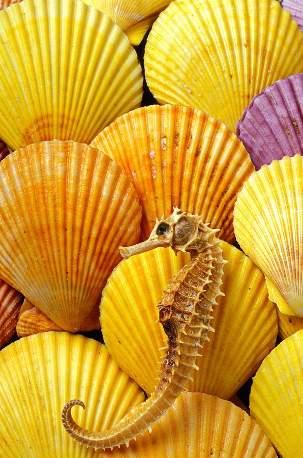 *YELLOW: Sea Horses, Sea Shells, Seahorses, Color, Mellow Yellow, Hello Yellow, Seashells, Mellowyellow, Animal