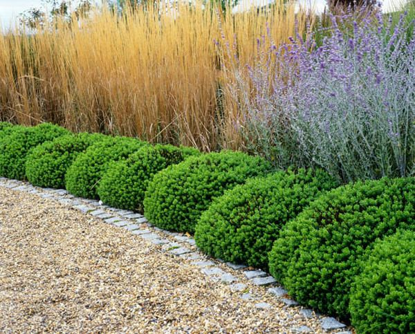 What a fabulous and distinctive hedge if you are looking for Low maintenance plants shrubs