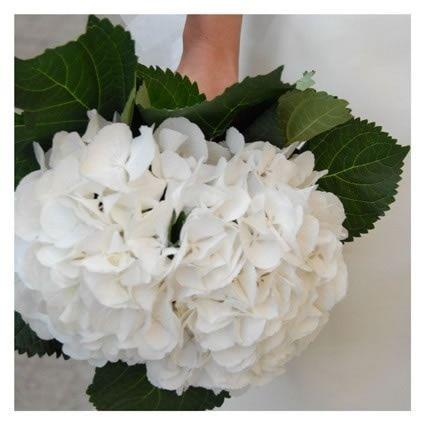 Bouquet Ortensie Bianche