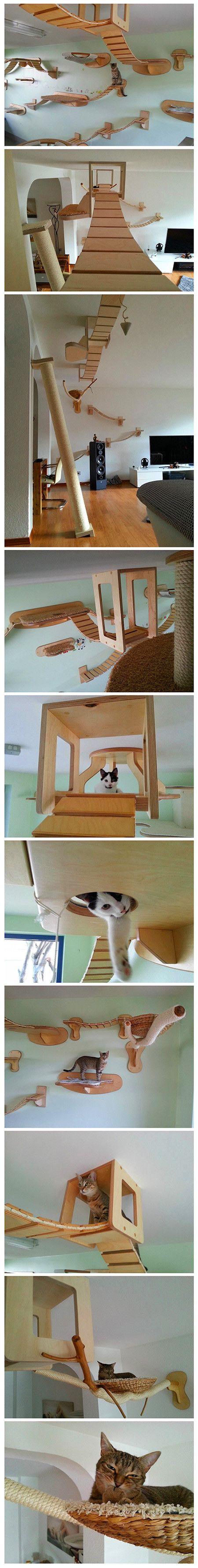 Freaks verwandeln Raum in eine riesige ausgesetzte Katze-Spielplatz