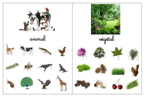 Après la différenciation entre le vivant ou non , voici les règnes animal et végétal (le minéral viendra plus tard). Télécharger le fi...