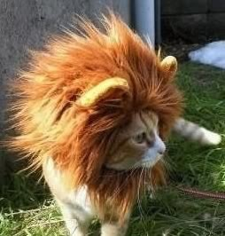 15 Best Images About Catlion On Pinterest Cats Pictures