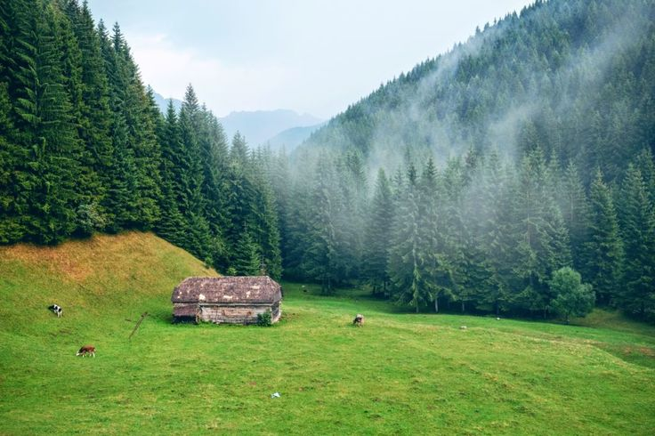 When I'm not traveling the world I like to think about traveling the world and plan my next world trip. -- Abi Goodman, on traveling through Romania