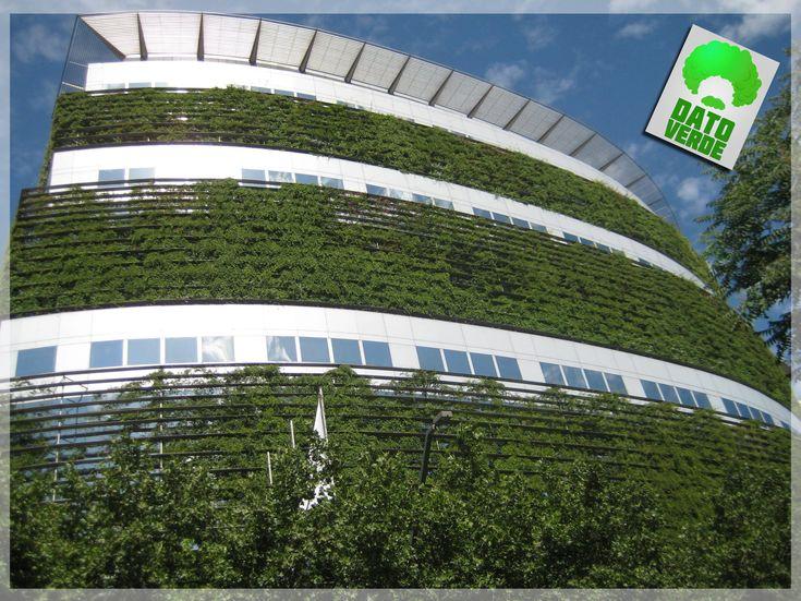 M s de 25 ideas incre bles sobre muros verdes en pinterest for Muros y fachadas verdes jardines verticales
