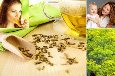 Fenchel: Infos über Fenchel und Fencheltee, die Anwendung und Wirkung, wie Fencheltee beim Baby und Säugling sowie in der Schwangerschaft hilft ...