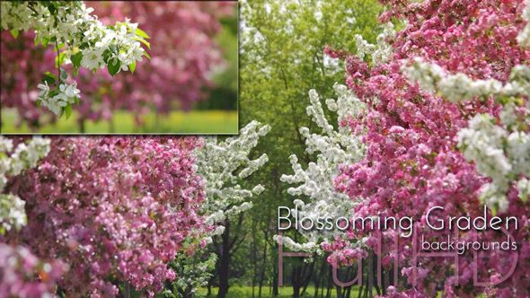 Spring Blossoming Garden video footage collection by cinema4design, spring blossoming garden, blossoms, spring nature video background.