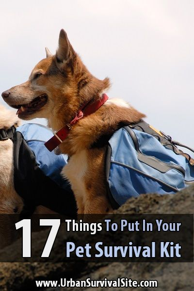 When people get busy storing supplies, reading survival books, and practicing their skills, it's easy for them to forget about their pets.