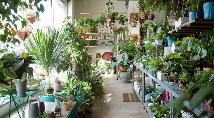 Chicago Store – Sprout Home
