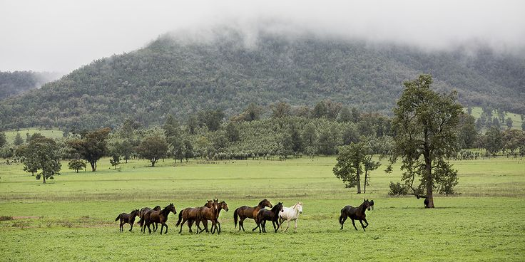 Print of the week: Let the Horses Run  Available as a panoramic print or canvas in the online store!