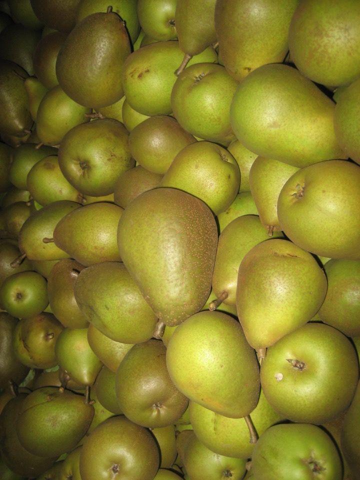 Obst - Frisches Obst - Birnen - Beurré Hardy (NL)  - Sortiert
