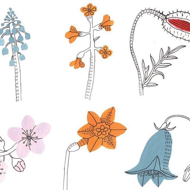 【josefin_norlin】さんのInstagramをピンしています。 《Close up, flower studies. Cottage garden flowers. #drawings #draw #drawing #illustrator #illustration #illustrationartist #illustrationart #illustratör #illustrera #art #artwork #artist #nature #botanicalgarden #botanical #gouachepainting #gouache #blommor #penandink #teckning #aquarelle #akvarell #botanical#flowers #contemporaryart #josefinnorlin #poppy #daffodil #cottageflowers #bluebell #cherryblossoms》