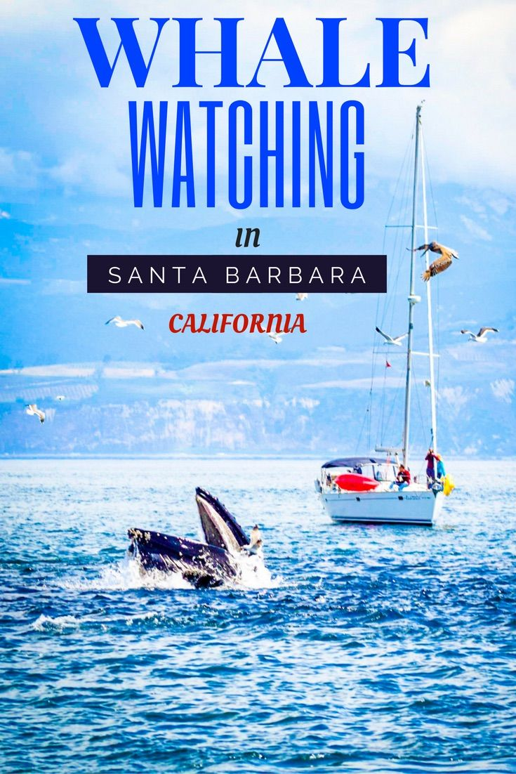 Santa Barbara is a stunning coastal destination just 2 hours north of Los Angeles. Join us as we check out the Whale Watching just off the coast of Santa Barbara.