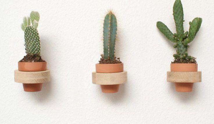 Hoe leuk zijn deze cactussen voor aan je muur