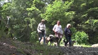 Bayerischer Waldl, 92444 Rötz: Urlaub mit Hund im Bayerischen Wald - #deutschlandurlaub