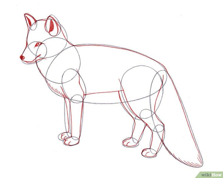 how to draw a realistic fox step by step