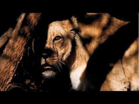Mattias Klum - Face-Off with a Lion