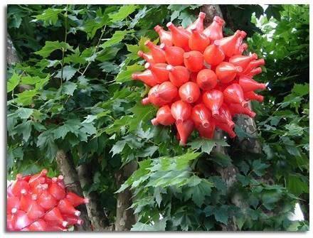 Flores hechas con picos de botellas desechables amor y for Adornos navidenos hechos con botellas plasticas