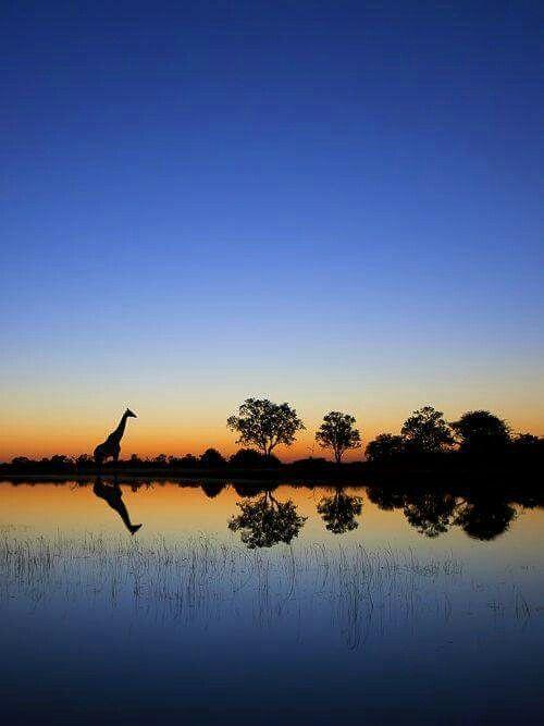 ALBA sul delta dell'OKAVANGO, Botswana  Puoi svegliarti anche molto presto all'alba, ma il tuo destino si è svegliato mezz'ora prima di te. (Proverbio africano)