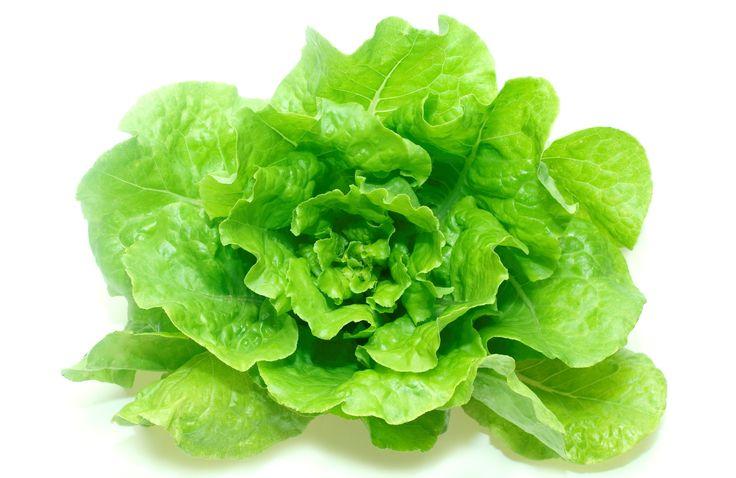 Come coltivare la lattuga in vaso - La lattuga è ricca di proprietà importanti per la salute: ecco come coltivarla in vaso, anche a partire dagli scarti.