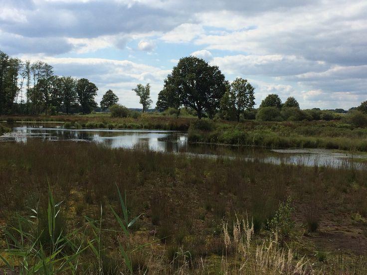 Heide en moeras Empese en Tondense Heide