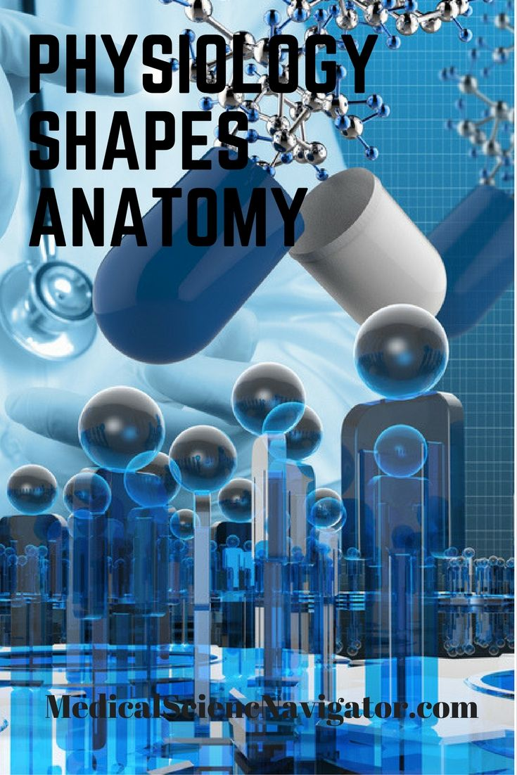 17 best Tips & Strategies for Studying Anatomy and Physiology images ...