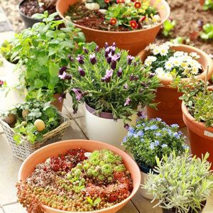 Potted plants - growing plants - plant cuttings - garden ideas - allaboutyou.com