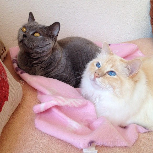 Roxy & Tigerlino