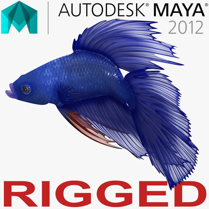 Blue Betta Fish Rigged for Maya 3D model
