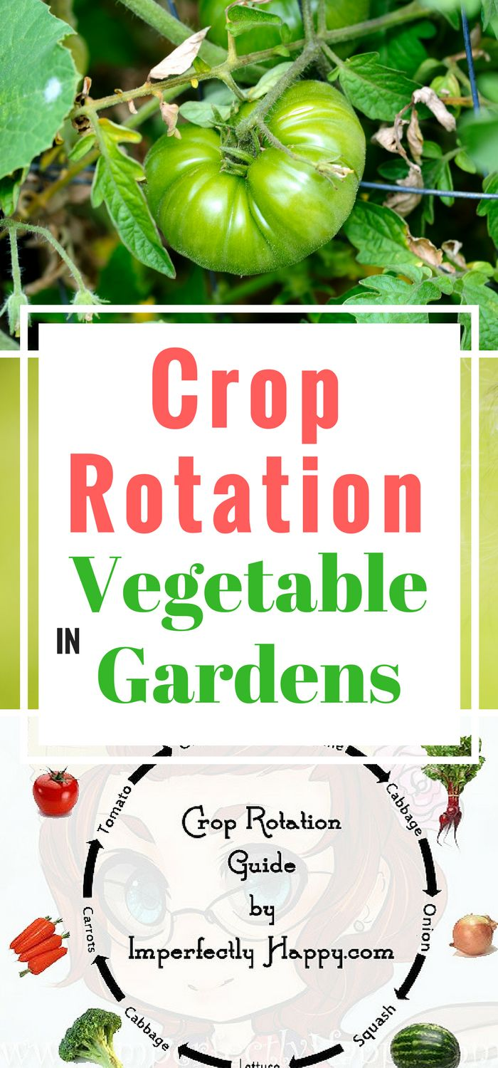 How To Use Crop Rotation When Gardening   Have Bigger Harvests And A  Healthier Vegetable Garden