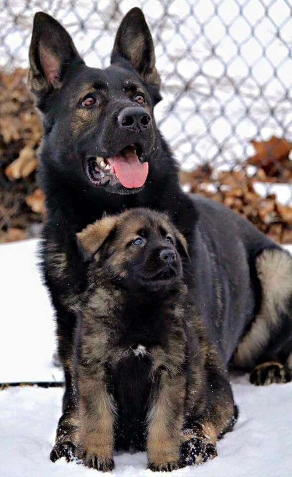 Diensthunde aus der Schweiz.  (Wir wollen auch mitmachen!)