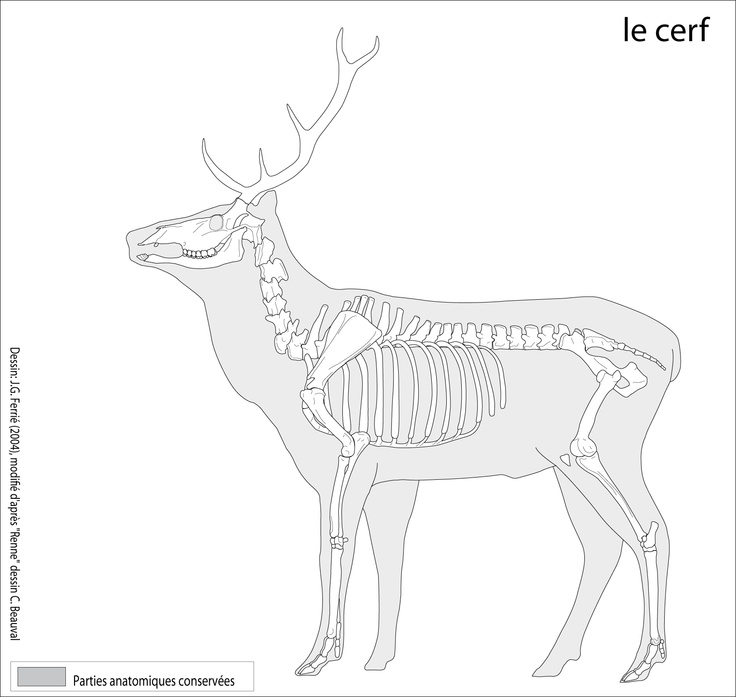 Cervus canadensis, the wapiti, or better known as the elk
