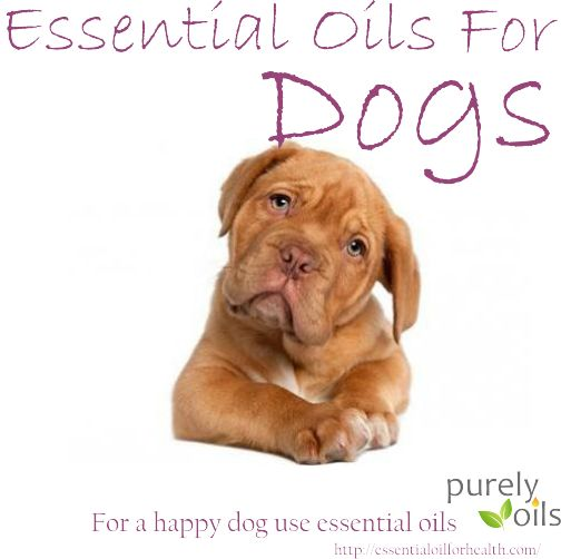 For a happy dog | Essential Oil For Health