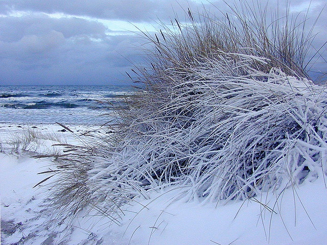 Snowy winter beach, Denmark. There is no reason beaches can't be as beautiful during winter :)