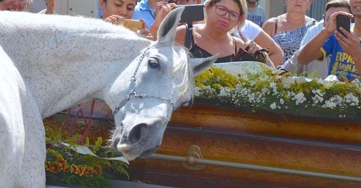 Man Dies Suddenly, Then His Grieving Horse Smells His Casket And Breaks Down At The Funeral via LittleThings.com