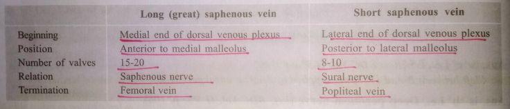 """Long & Short saphenous Vein ... imp (*) AM Long PL Short 【 Note: Great saphenous vein """" 1 cm """" anterior to medial malleolus 】"""