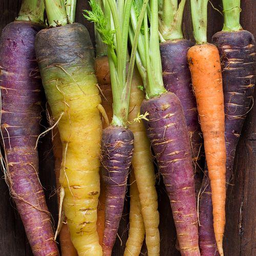 Carrot Heritage Rainbow Blend Carrots Companion 640 x 480