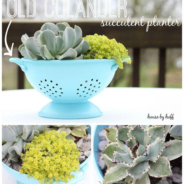 Old Colander Succulent Planter