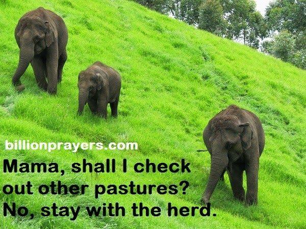 prayer billion herd blessing